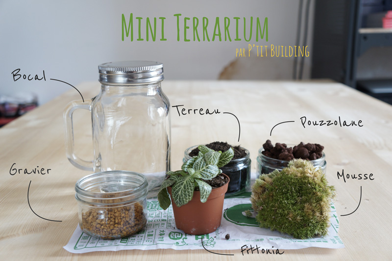 Diy Mini Terrarium P Tit Building